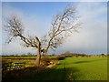 NZ2311 : Farmland, Manfield by Andrew Smith
