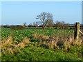 NZ2312 : Farmland, Manfield by Andrew Smith