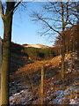 SJ9771 : Bollin Brook upper valley by Peter Turner