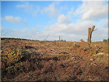 SE6091 : Felled  and  Cleared  Forest by Martin Dawes