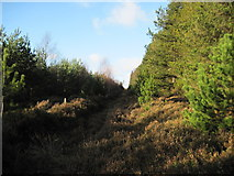 SE6091 : Fire  Break  and  Track  in  East  Moor  Wood by Martin Dawes