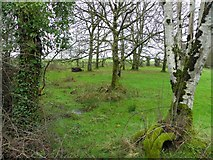 H4761 : Wooded area, Derrybard by Kenneth  Allen