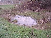 TQ2197 : Small pond on Saffron Green by David Howard