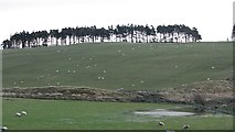 NT0442 : Flooded ground, Cocklaw Moss by Richard Webb