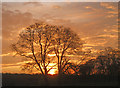 SK6370 : Sunset at Thoresby Park by Trevor Rickard