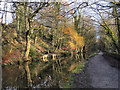 SJ9490 : Peak Forest Canal Near Chadkirk by David Dixon