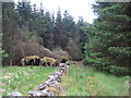 NY6199 : Dry Stone Wall, Rushy Knowe by Les Hull