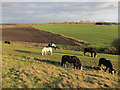 TF5800 : Horses grazing on Hundred Foot Bank by Hugh Venables
