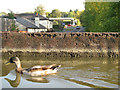 SP1562 : Corrosion, Wootton Wawen aqueduct by Robin Stott