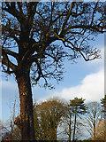 SO9095 :  Muchall Park trees in Penn, Wolverhampton by Roger  Kidd
