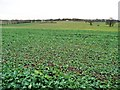 SE4930 : Crop field, south of Old Quarry Lane by Christine Johnstone