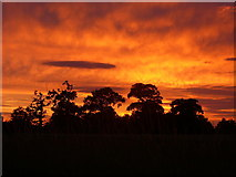 TM0663 : Sunset and tree silhouette west of Gipping by Colin Park