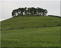 SE7296 : Hill Plantation by Peter McDermott