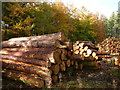 SJ5570 : Log stacks and autumn colours by Colin Park