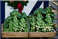 TQ2754 : Brussels Sprouts at Fanny's Farm Shop by Peter Trimming