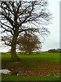 SU7723 : Field near Durford Mill by Shazz