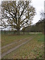 TL0992 : Mature Oak tree on the Elton Estate by Michael Trolove