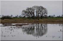 TQ9293 : Winter Trees on Paglesham Creek by John Myers