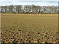 NT5783 : Fields at Blackdykes by M J Richardson