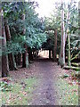 NZ0882 : Footpath Bolam Lake CP by Christine Westerback