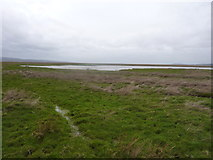 SJ2774 : A grey day on the Burton Marshes by Peter Aikman