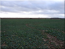 SE4738 : Crop field off the B1217 by JThomas