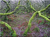 SW4837 : Scary wood near Amalveor by Bob Jones