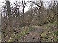 SJ8393 : Path Through Hough End Clough by David Dixon