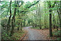 TR1263 : National Cycle Route 1, Clowes Wood by N Chadwick