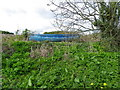 NO5614 : Boat in the hedge, Boarhills by Maigheach-gheal