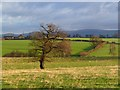 NY4349 : Pasture, St Cuthbert Without by Andrew Smith