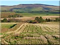NY5644 : Farmland, Kirkoswald by Andrew Smith