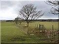 NZ0189 : Field boundary near Harwood Gate by Oliver Dixon