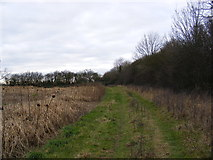 TM2768 : Looking towards the Bee Hives at Downs Farm by Adrian Cable