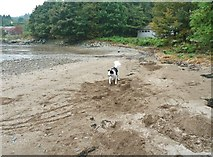 NX6548 : Building sand castles by Ann Cook