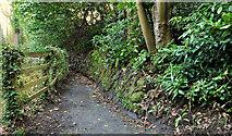 J4681 : Path, Crawfordsburn Country Park (3) by Albert Bridge