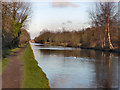 SJ7790 : Bridgewater Canal by David Dixon