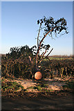 NT1474 : Fallen Giant by Anne Burgess