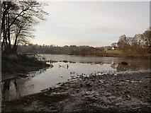 NS5379 : Carbeth Loch in winter by Alec MacKinnon