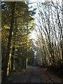 SY1187 : Ride, Greystone Hill Plantation by Derek Harper