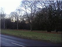 TQ1350 : Ranmore Common by David Howard