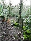 SE0023 : Woodland path, Cragg Vale by Humphrey Bolton