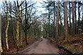 SJ5571 : Delamere Forest by Jeff Buck