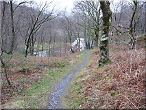 SH7357 : Woodland path above Capel Curig by Jeremy Bolwell