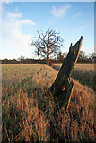 TL8063 : Old tree stump and ditch by Bob Jones
