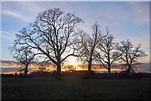 TL8063 : Clump of trees in the sunset by Bob Jones