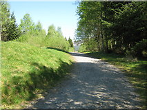NX4564 : A cycle track in Kirroughtree Forest [2] by Ann Cook