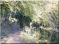 TQ5264 : Darent Valley Path near Lullingstone by Malc McDonald