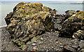 J4583 : The shore at Helen's Bay (3) by Albert Bridge