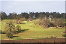 TL8162 : North end of Ickworth Park by Bob Jones